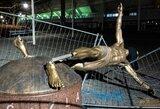 """Z.Ibrahimovičiaus žinutė jo statulą nuvertusiems vandalams: """"Mano istorija išliks amžiams"""""""