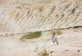 """Dakaro ralio ištvermingieji – """"vienišiai"""""""