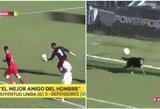 Kuriozas Argentinos lygoje: šuo išgelbėjo komandą nuo įvarčio